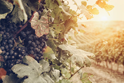 A Guide to Biodynamic and Organic Wine