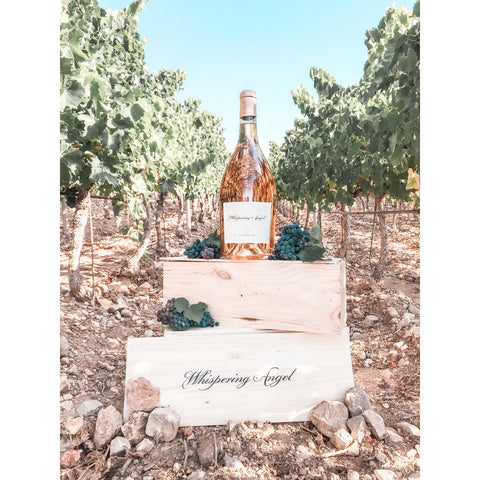 Whispering Angel Lands at Perfect Cellar