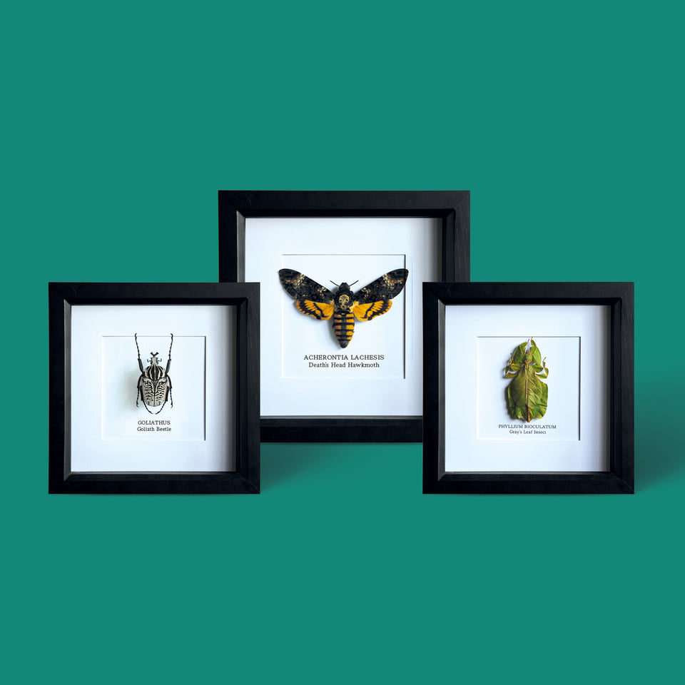 The Bug Club Collection