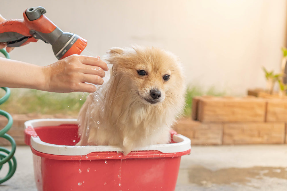 how to bathe a dog that hates water