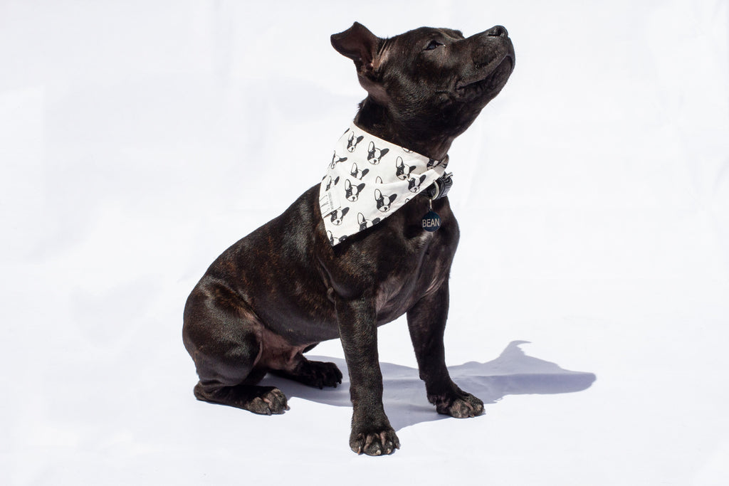Discover our brand-new bandanas for dogs and cats!