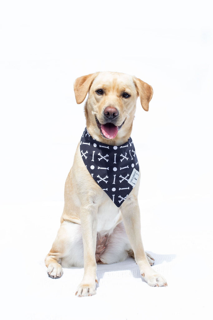 5 reasons why your dog or cat should wear a bandana