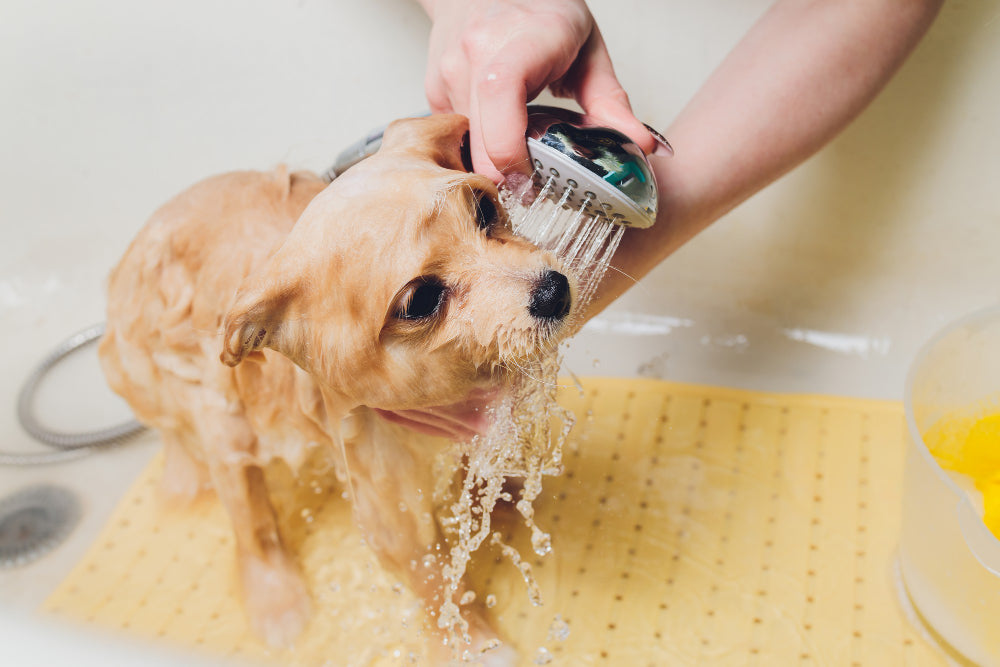 Tips to bathe a dog