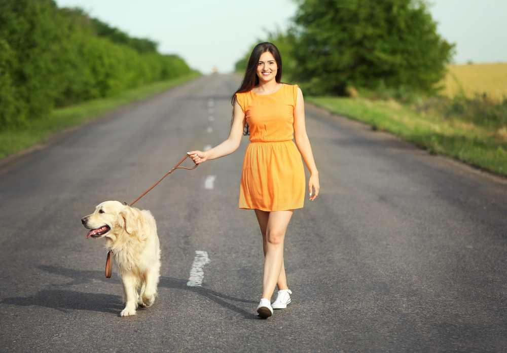 The ultimate guide for leash training