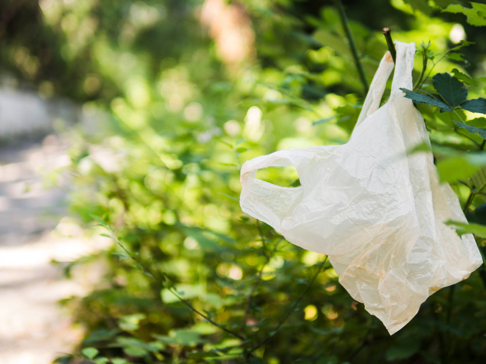 Dog poop bags: degradable, biodegradable or compostable?
