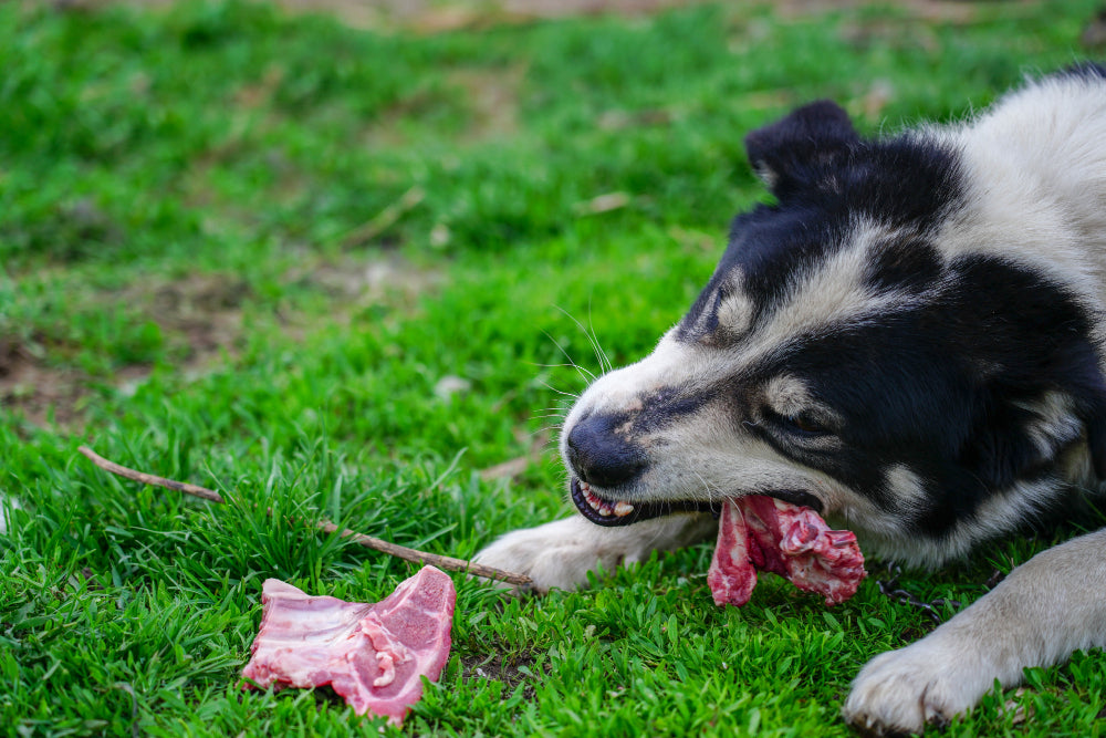 Dogs can eat human foods?