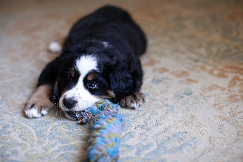 DIY dog toy: how can you make dog toys at home?