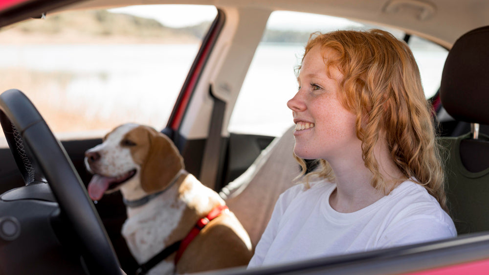 How can I tell if my dog is getting motion sickness?