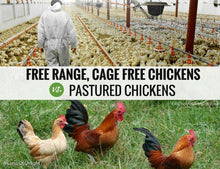Load image into Gallery viewer, Range free cage free chickens vs Pastured Chickens