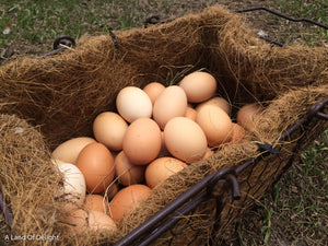 Pasture Raised Eggs: One Dozen or One Flat (Non-GMO fed) LOCAL PICK UP ONLY
