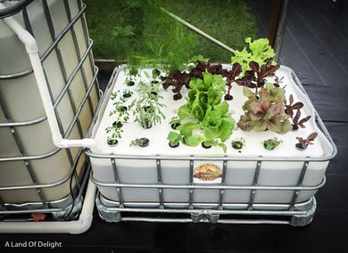 Aquaponics 1-Bed Self Sustaining Garden System Pod