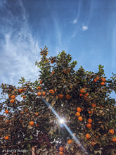 Load image into Gallery viewer, Hamlin Orange Tree (LOCAL PICKUP ONLY)