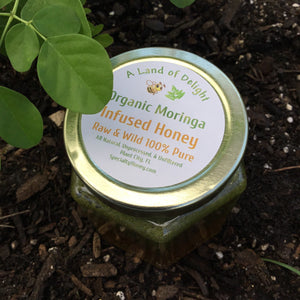 Specialty Gourmet Honey: Organic Moringa Infused Raw Honey - 12oz Jar Sitting Next to Moringa Plant