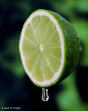 Load image into Gallery viewer, Key Lime Tree (LOCAL PICK-UP ONLY)