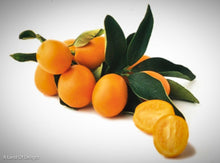 Load image into Gallery viewer, Kumquat Mewia fruit on countertop