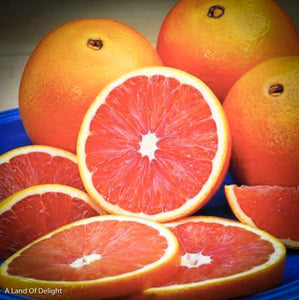 Red Navel Orange Slices