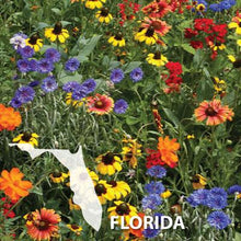 Load image into Gallery viewer, Florida Wildflowers in Field