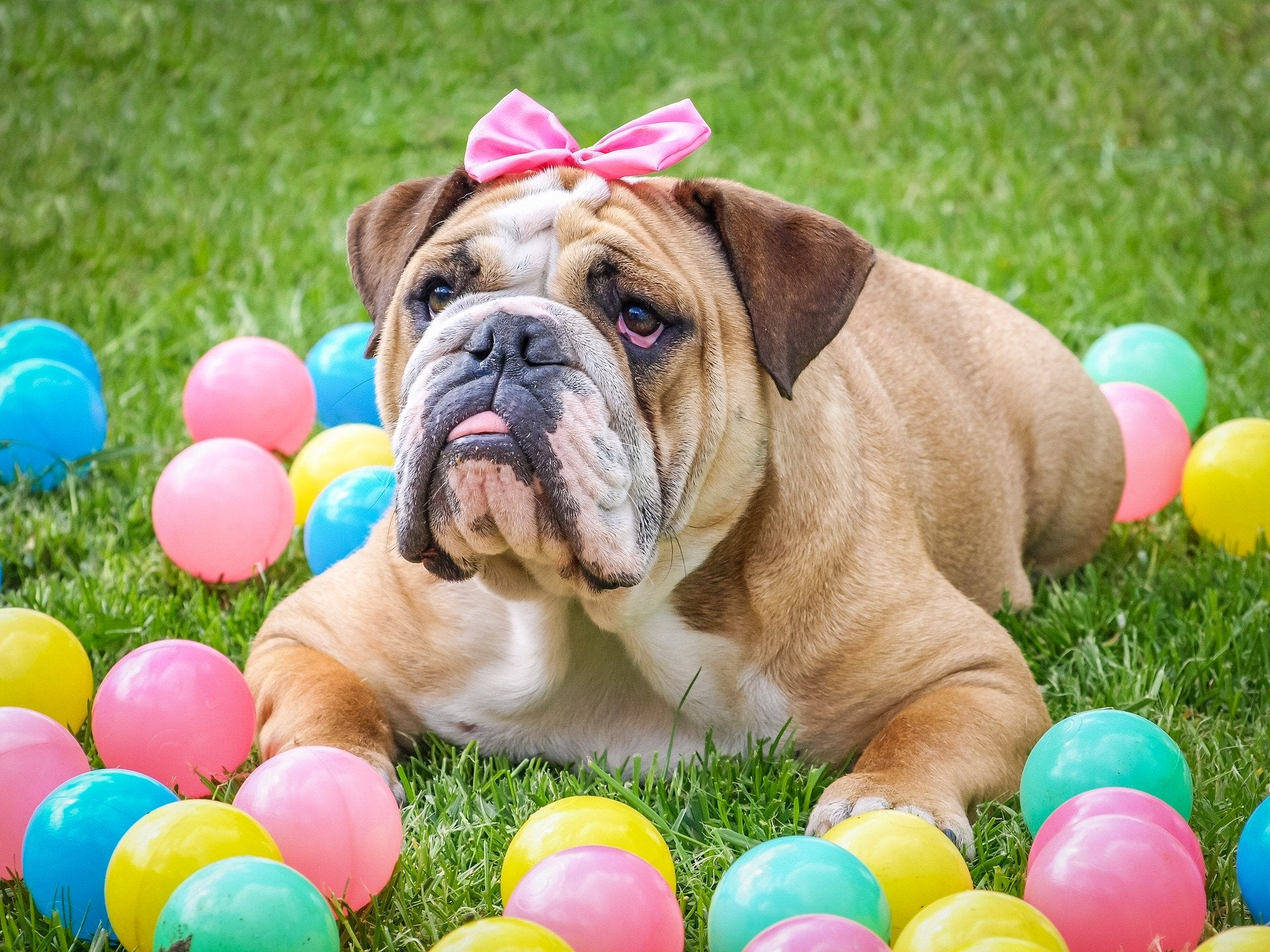 Planning a home Easter Egg hunt this year? What about your pets this Easter?