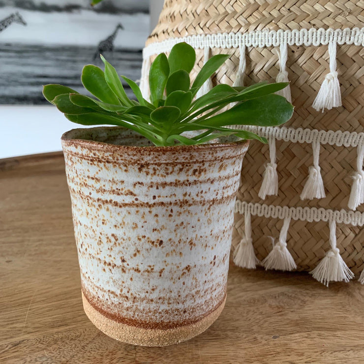 Handmade Pottery - Speckled Cactus Pot (Medium) - Common Thread Style