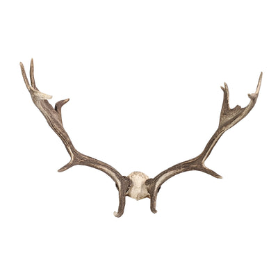 Vintage Deer Antlers with European Mount - Common Thread Style