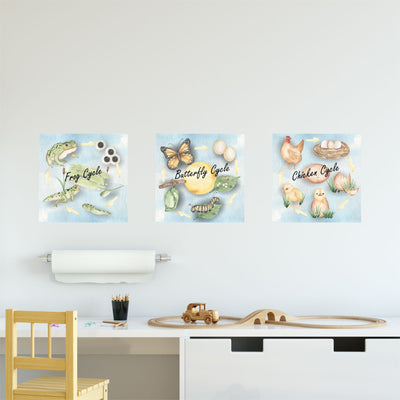Frog Butterfly and Chicken Lifecycle wall stickers