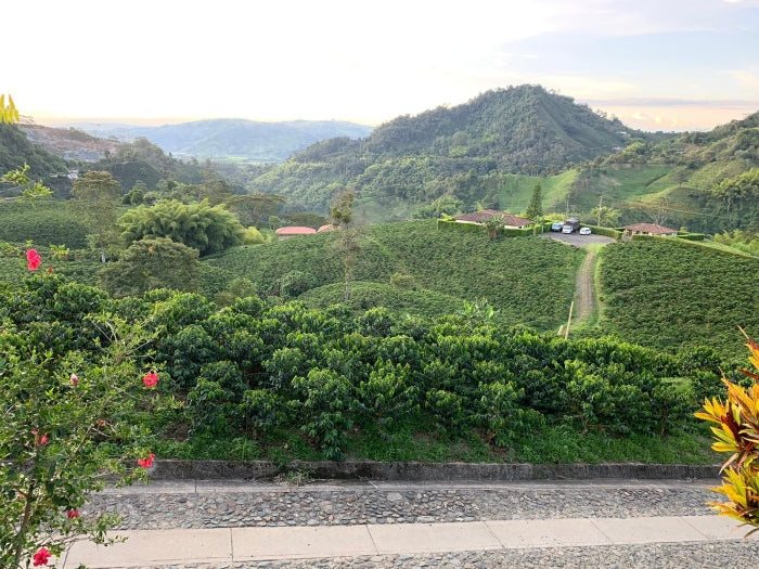 A beautiful Colombian landscape where Colombian coffee beans are grown