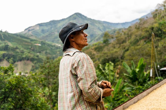 Coffee farmer in hat on his plantation holding Colombian coffee beans
