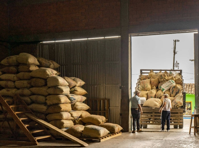 Colombian coffee farmers loading truck with arabica coffee beans for international export