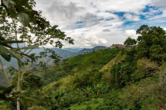 Landscape photo of the Colombian Coffee Triangle