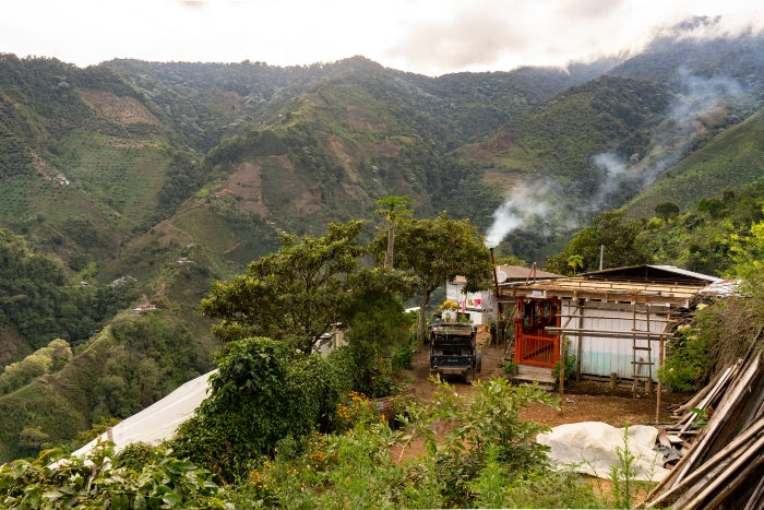 Landscape photograph of local farm producing Colombian coffee beans for Hermanos
