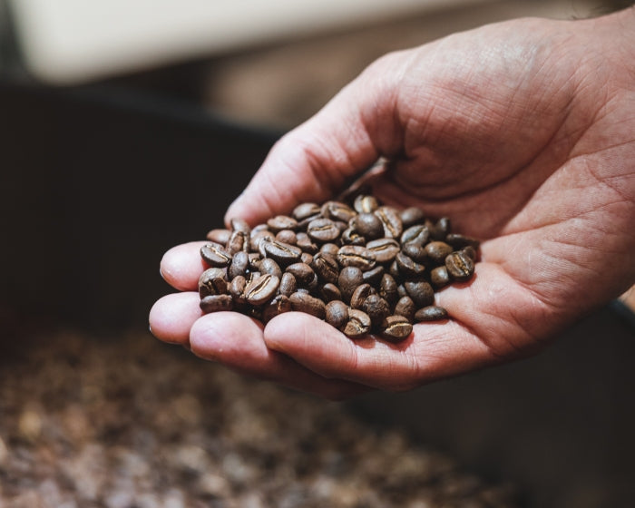 Roaster holding fresh coffee beans just after roasting process before retail