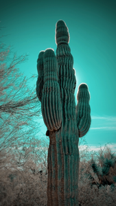 arizona sonoran desert photography saguaro cactus