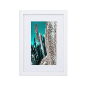 Arizona Winter Collection Photography - Pipe Cactus