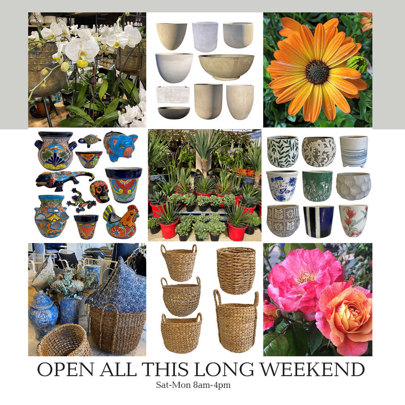 Open All Long Weekend