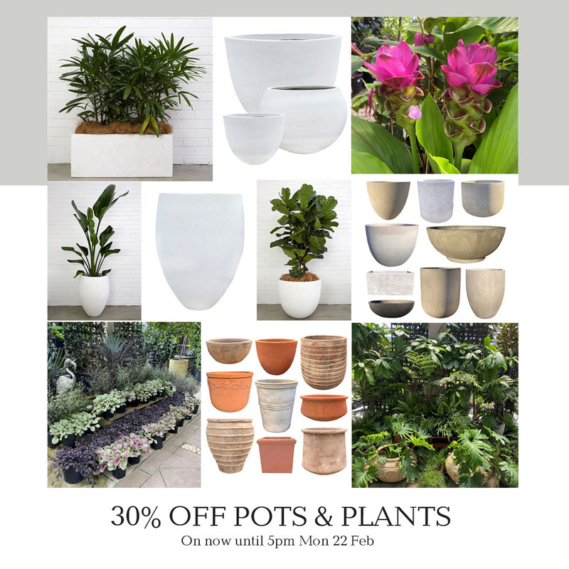 Poppy's 3 Day 30% off Pots and Plants Sale on Now!