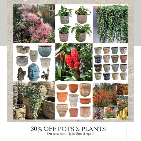 30% off Pots and Plants at Poppy's Home and Garden