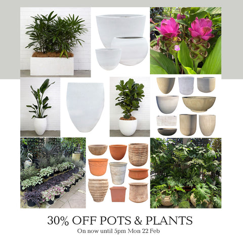 Poppy's 30% off Pots and Plants Sale