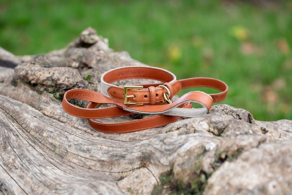 Dog Collar & Lead Gift Set