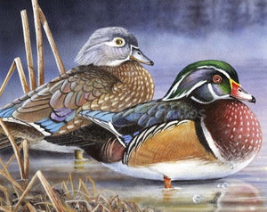 """2020 Wisconsin Duck Stamp Print"""