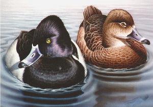 """Ring-Necked Ducks"""