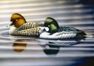 """Common Goldeneye"""