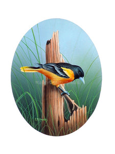 """Baltimore Oriole"""