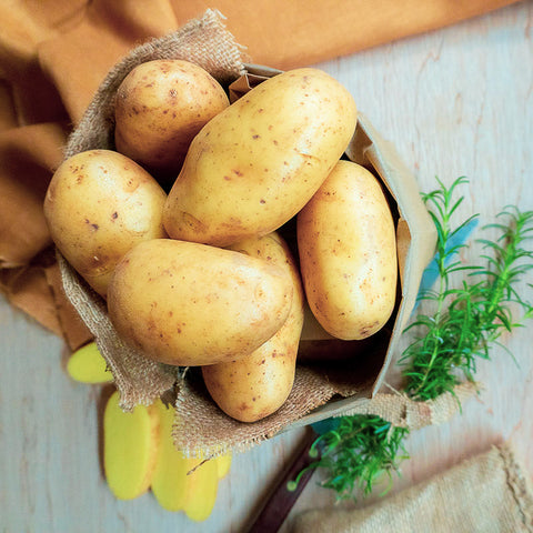 Tasmanian Dutch Cream Potatoes - NEW SEASON