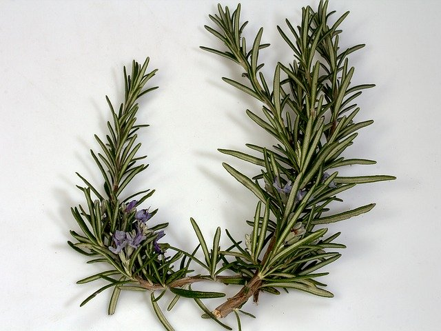 What is rosemary oil?