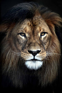Tempered Glass Art - Lion Wall Art Decor