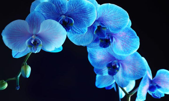 Tempered Glass Art - Blue Orchid Wall Art Decor