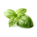 Basil (bunch) Product