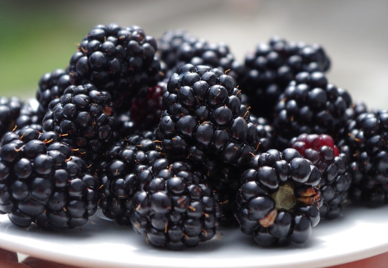 Can Bearded Dragons Eat Blackberries? The Info You Need   Dragon's Diet