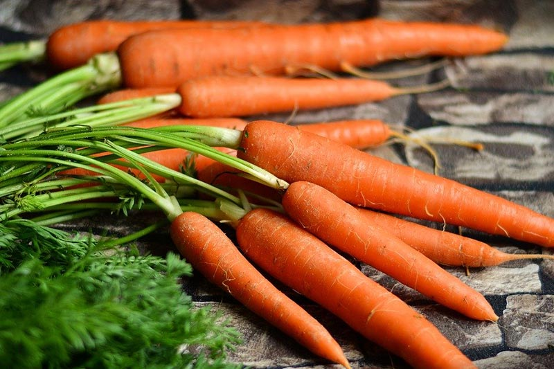 Fresh unpeeled carrots with leaves