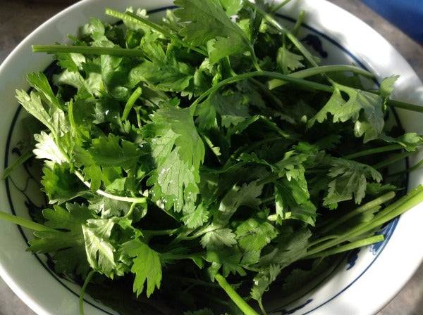 Fresh cilantro in ceramic bowl